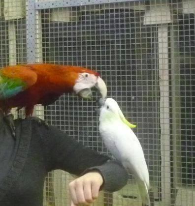 Papuzie Centrum Informacyjne Papugi